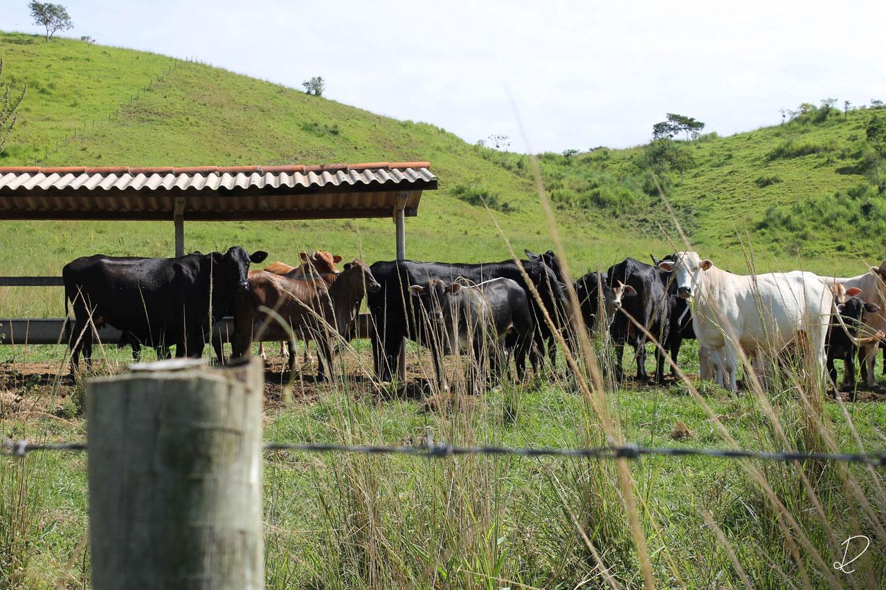 rian-design-fotos-fazenda-uba-2